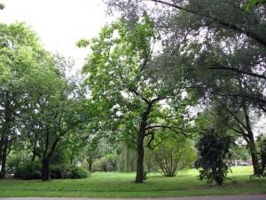 bomenpark Meijhorst Afbeelding 1